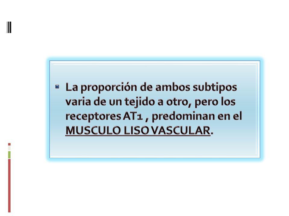 La proporción de ambos subtipos varia de un tejido a otro, pero los receptores AT1 , predominan en el MUSCULO LISO VASCULAR.