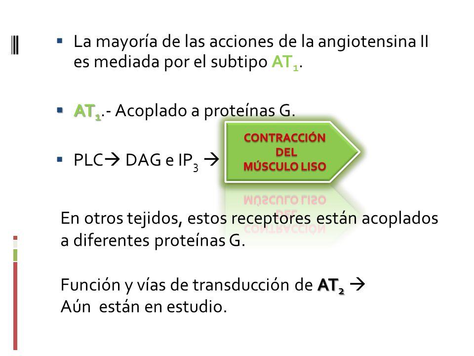 AT1.- Acoplado a proteínas G. PLC DAG e IP3 