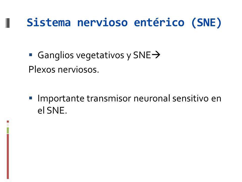 Sistema nervioso entérico (SNE)