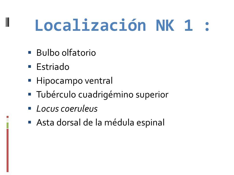 Localización NK 1 : Bulbo olfatorio Estriado Hipocampo ventral