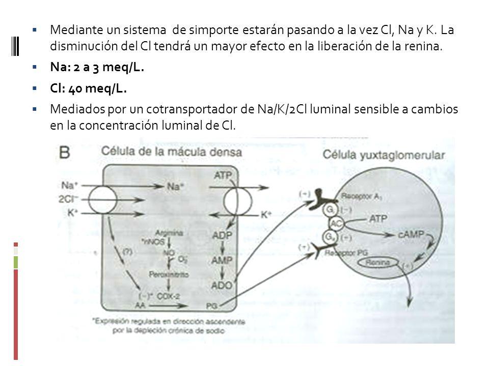 Mediante un sistema de simporte estarán pasando a la vez Cl, Na y K