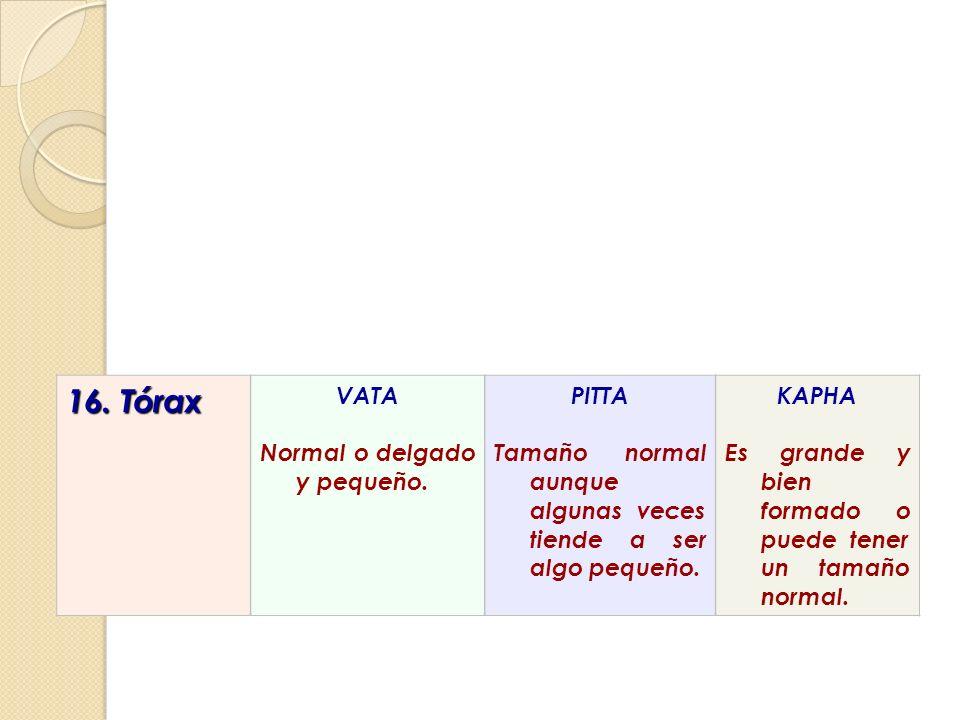 16. Tórax VATA Normal o delgado y pequeño. PITTA
