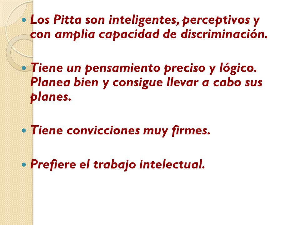 Los Pitta son inteligentes, perceptivos y con amplia capacidad de discriminación.