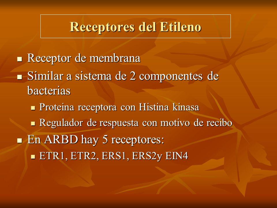 Receptores del Etileno