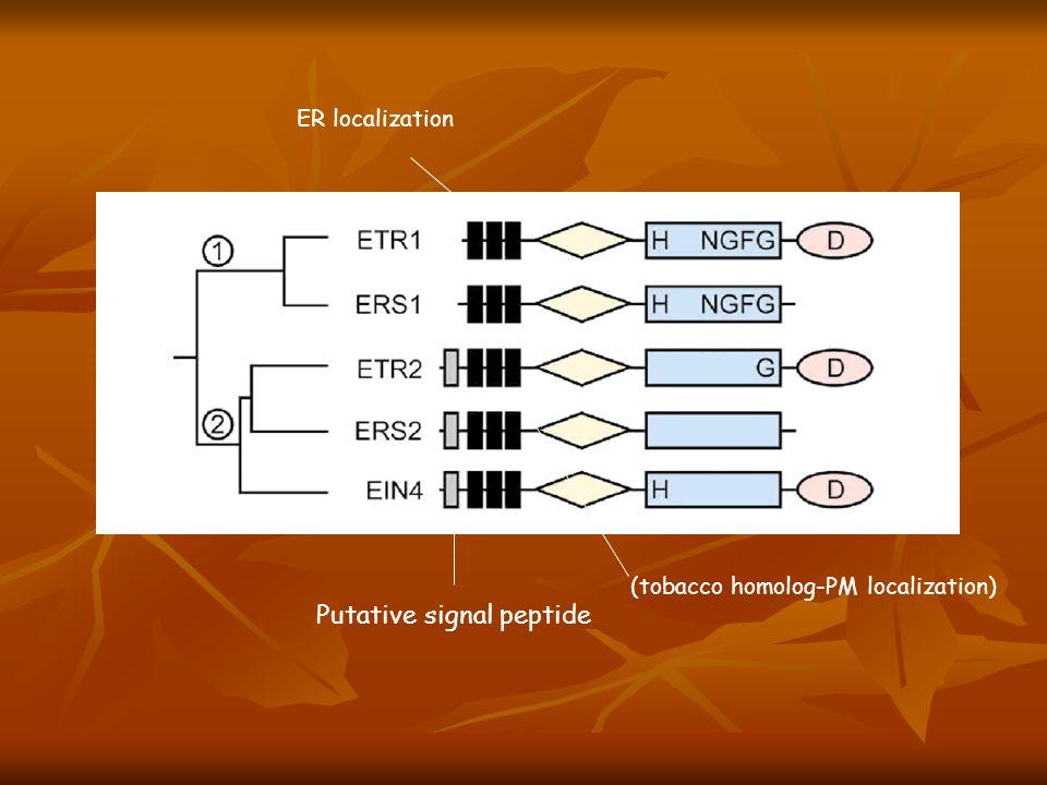 Putative signal peptide