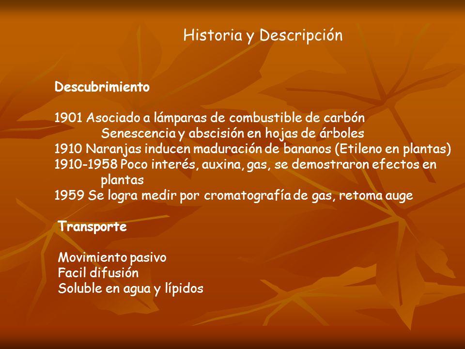 Historia y Descripción