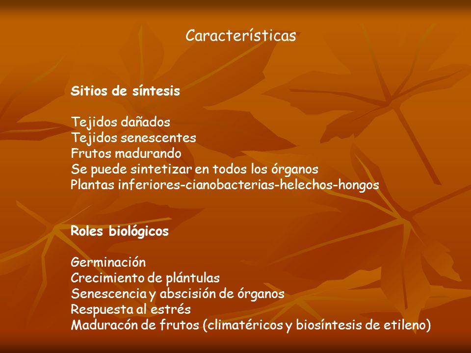 Características Sitios de síntesis Tejidos dañados Tejidos senescentes