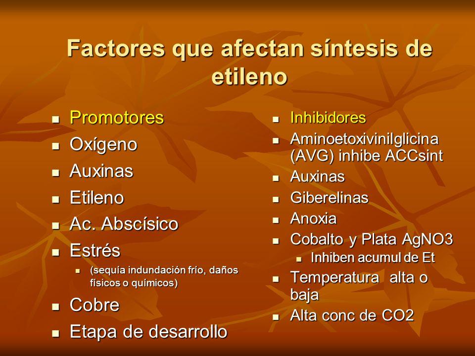 Factores que afectan síntesis de etileno