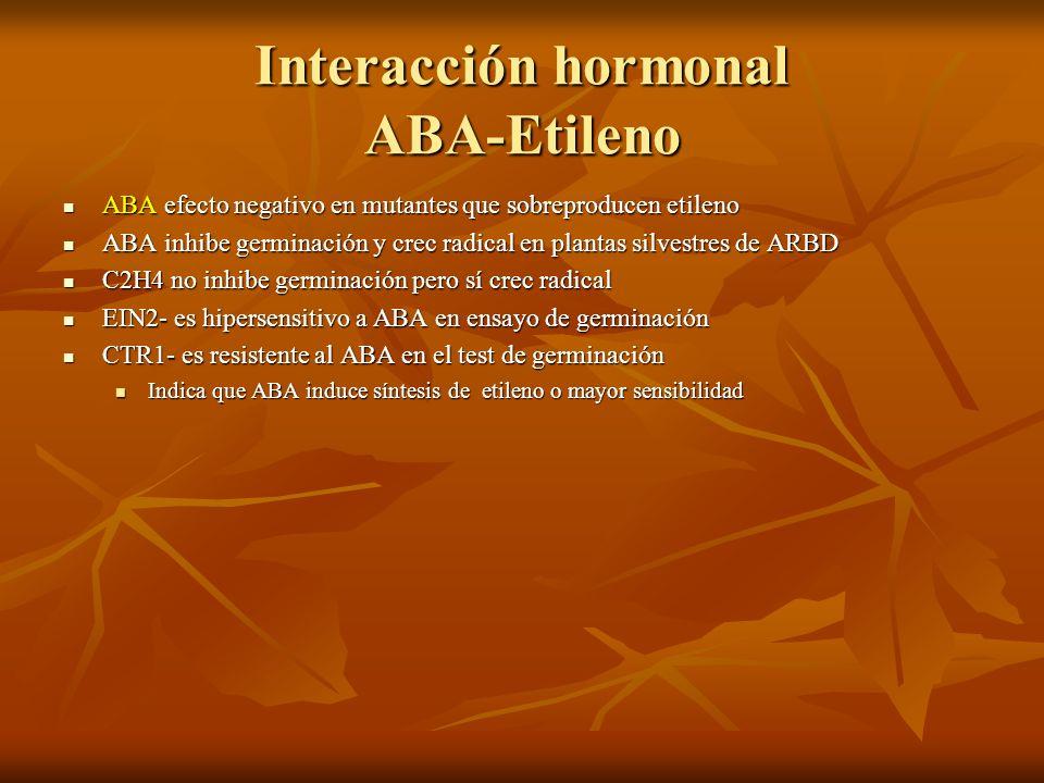Interacción hormonal ABA-Etileno