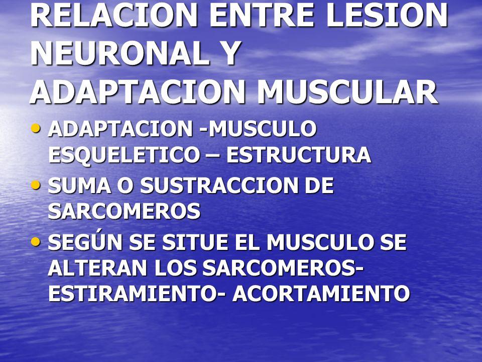 RELACION ENTRE LESION NEURONAL Y ADAPTACION MUSCULAR