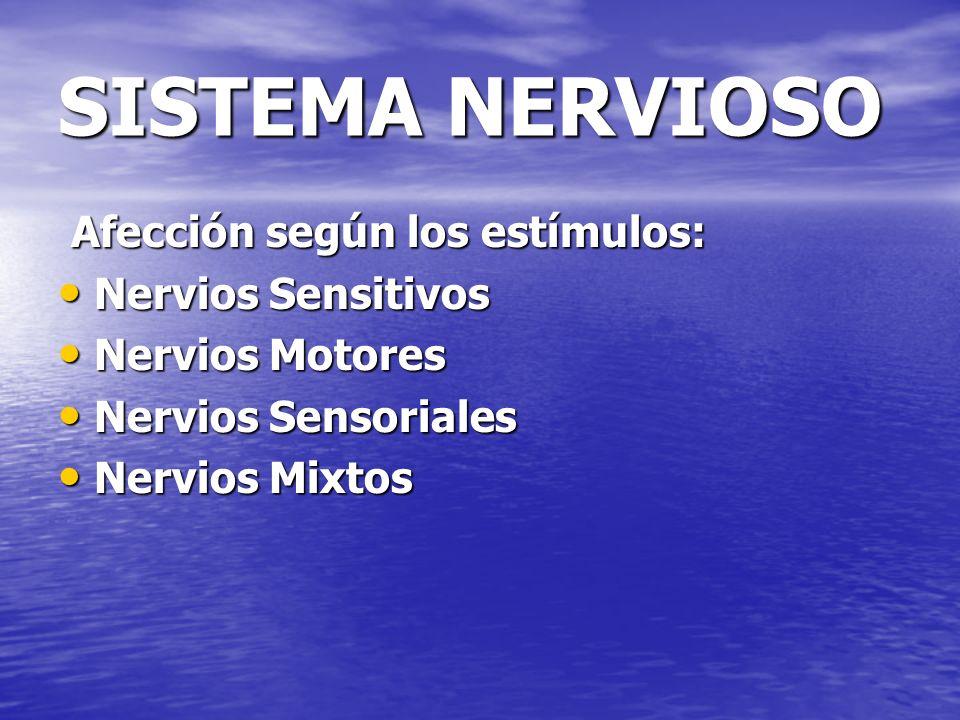 SISTEMA NERVIOSO Afección según los estímulos: Nervios Sensitivos
