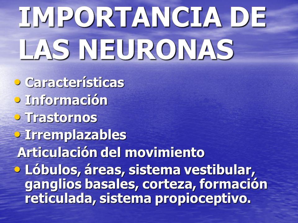 IMPORTANCIA DE LAS NEURONAS