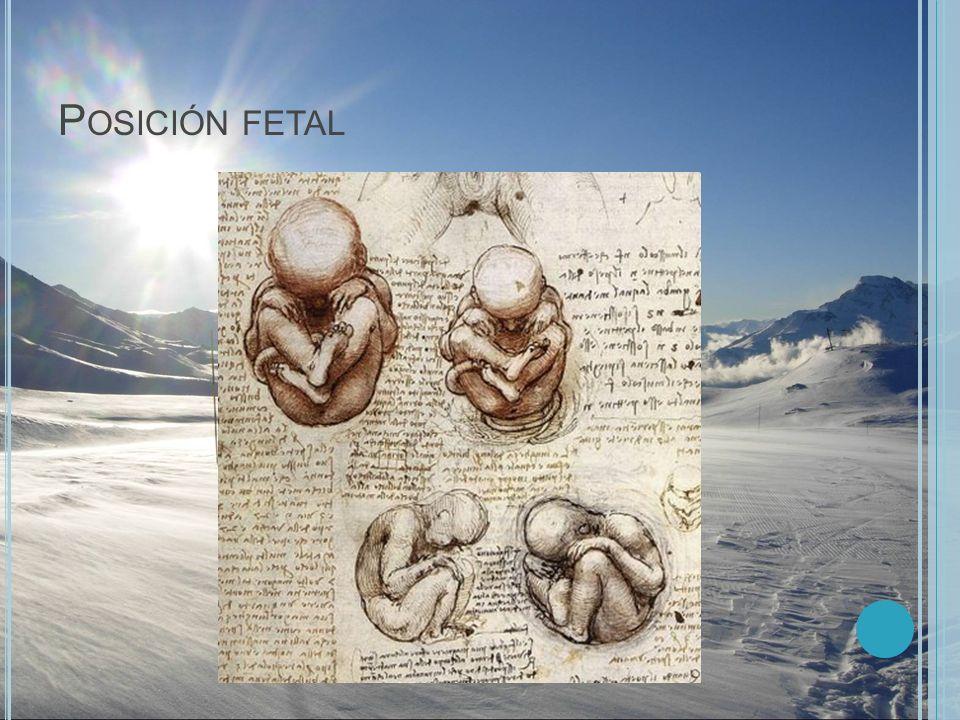Posición fetal