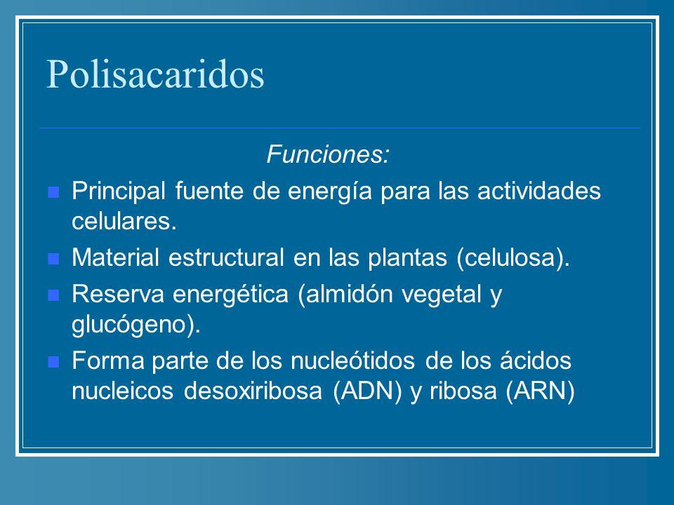 Polisacaridos Funciones:
