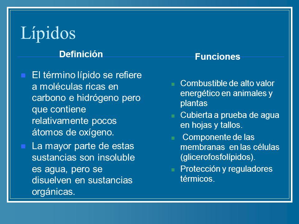 Lípidos Definición. Funciones.