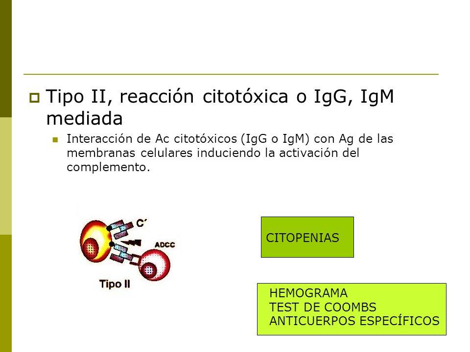 Tipo II, reacción citotóxica o IgG, IgM mediada