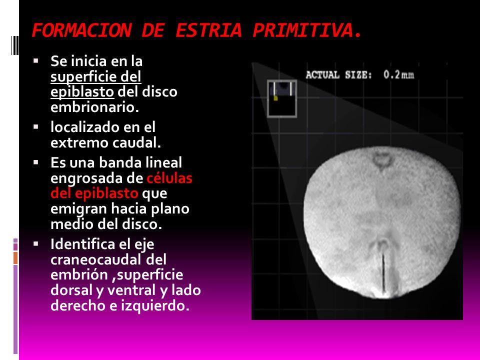 FORMACION DE ESTRIA PRIMITIVA.