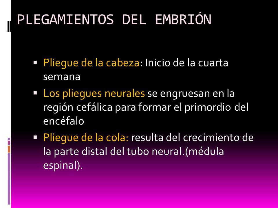 PLEGAMIENTOS DEL EMBRIÓN