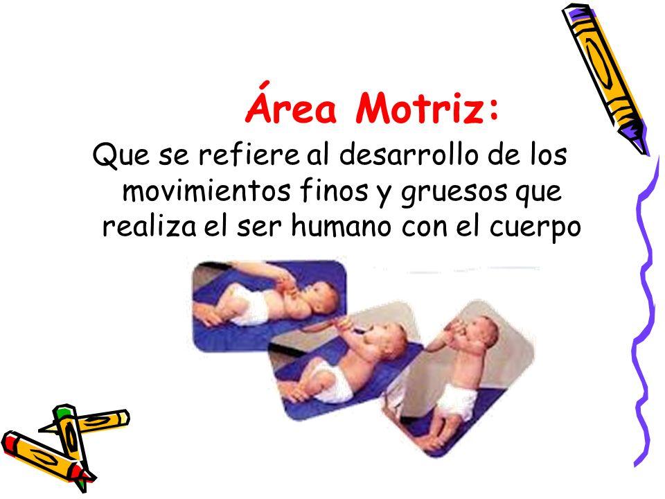 Área Motriz: Que se refiere al desarrollo de los movimientos finos y gruesos que realiza el ser humano con el cuerpo.