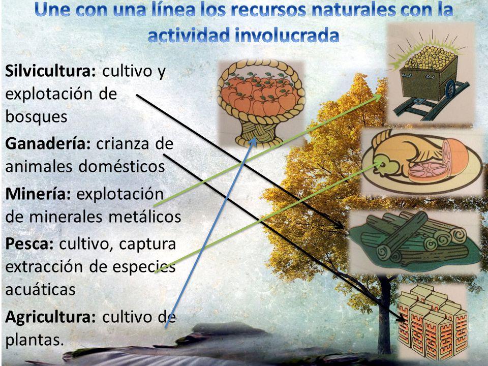 Une con una línea los recursos naturales con la actividad involucrada