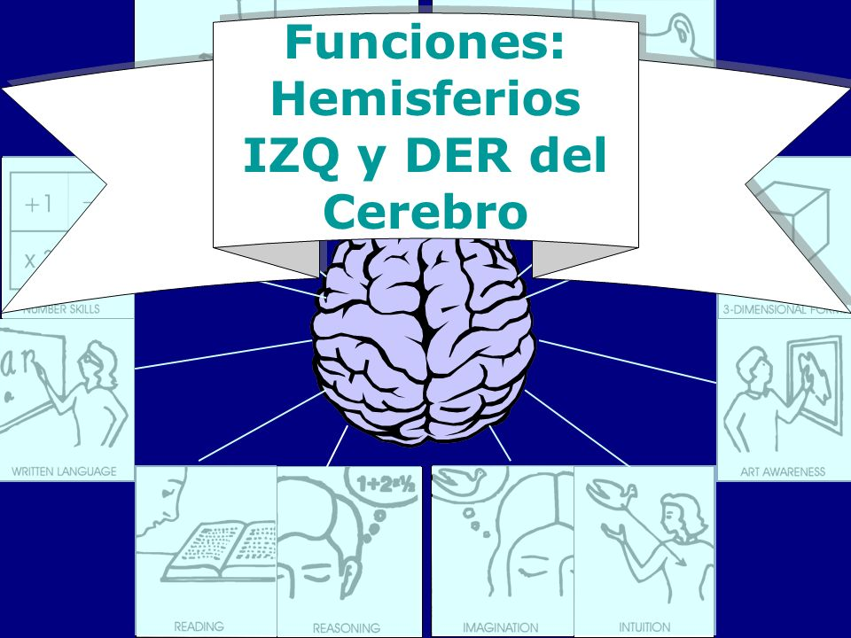 Funciones: Hemisferios IZQ y DER del Cerebro