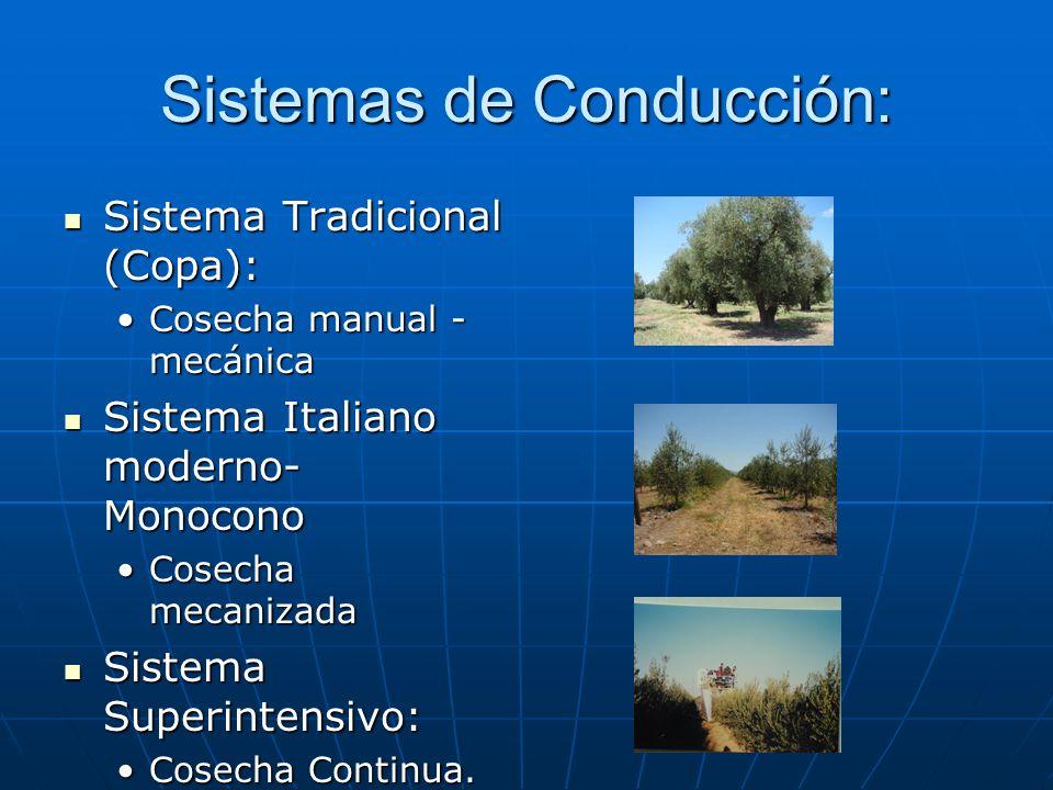 Sistemas de Conducción: