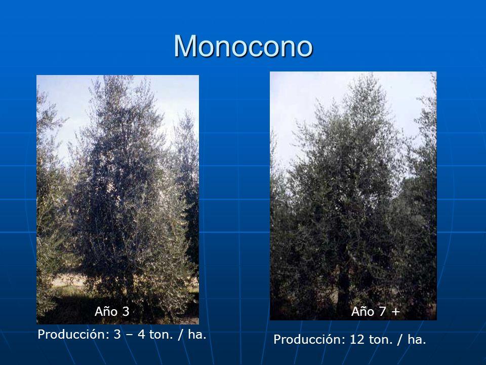 Monocono Año 3 Año 7 + Producción: 3 – 4 ton. / ha.