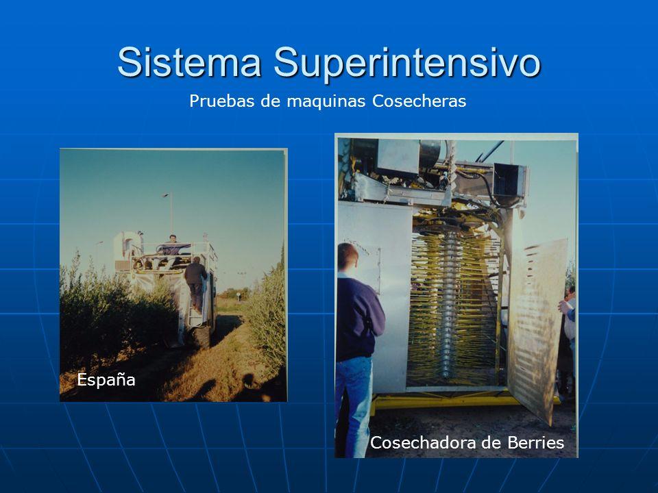Sistema Superintensivo