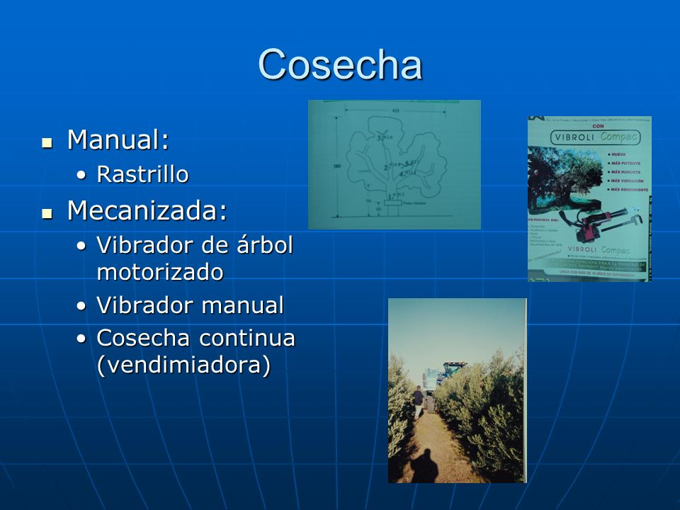 Cosecha Manual: Mecanizada: Rastrillo Vibrador de árbol motorizado