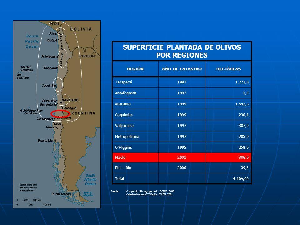 SUPERFICIE PLANTADA DE OLIVOS