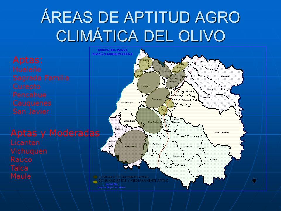 ÁREAS DE APTITUD AGRO CLIMÁTICA DEL OLIVO
