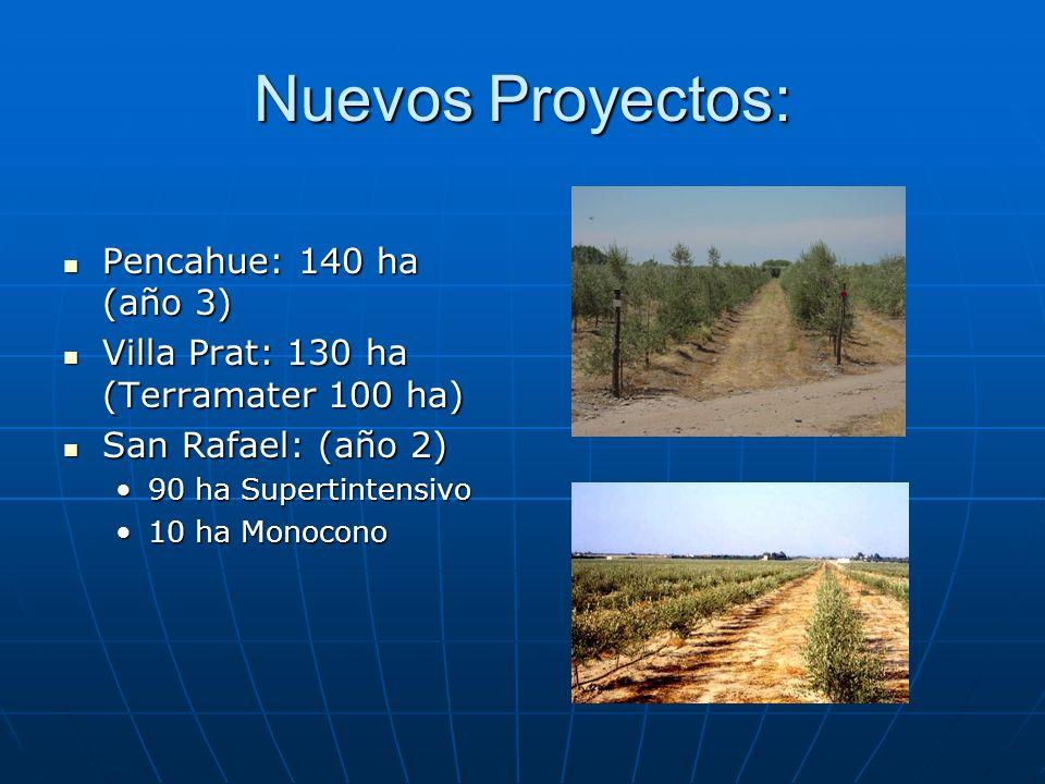 Nuevos Proyectos: Pencahue: 140 ha (año 3)