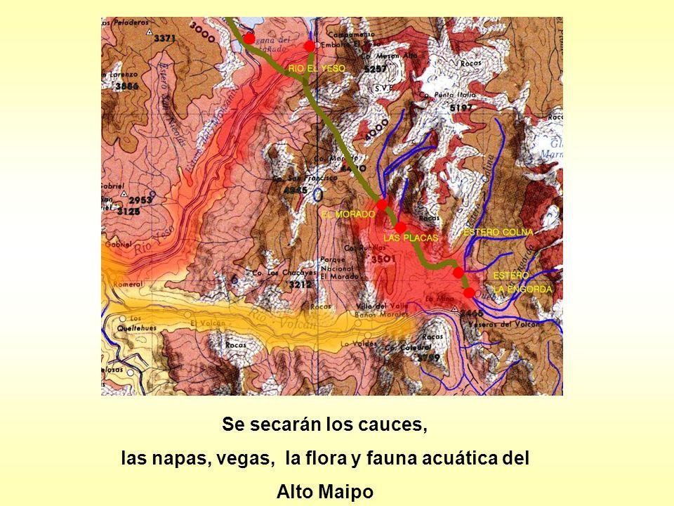 las napas, vegas, la flora y fauna acuática del