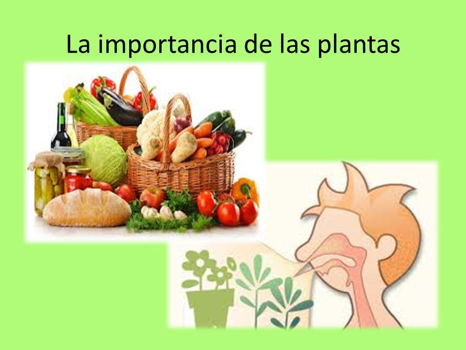 La importancia de las plantas ppt descargar for Importancia de los viveros forestales