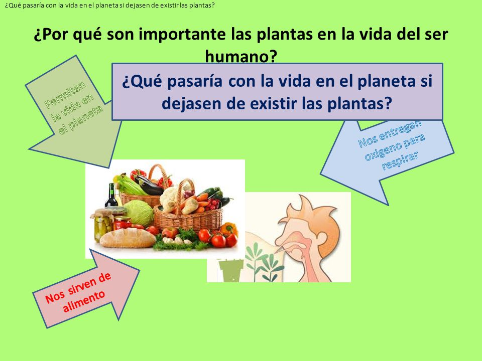 La importancia de las plantas ppt descargar for Cuales son las plantas ornamentales y para que sirven
