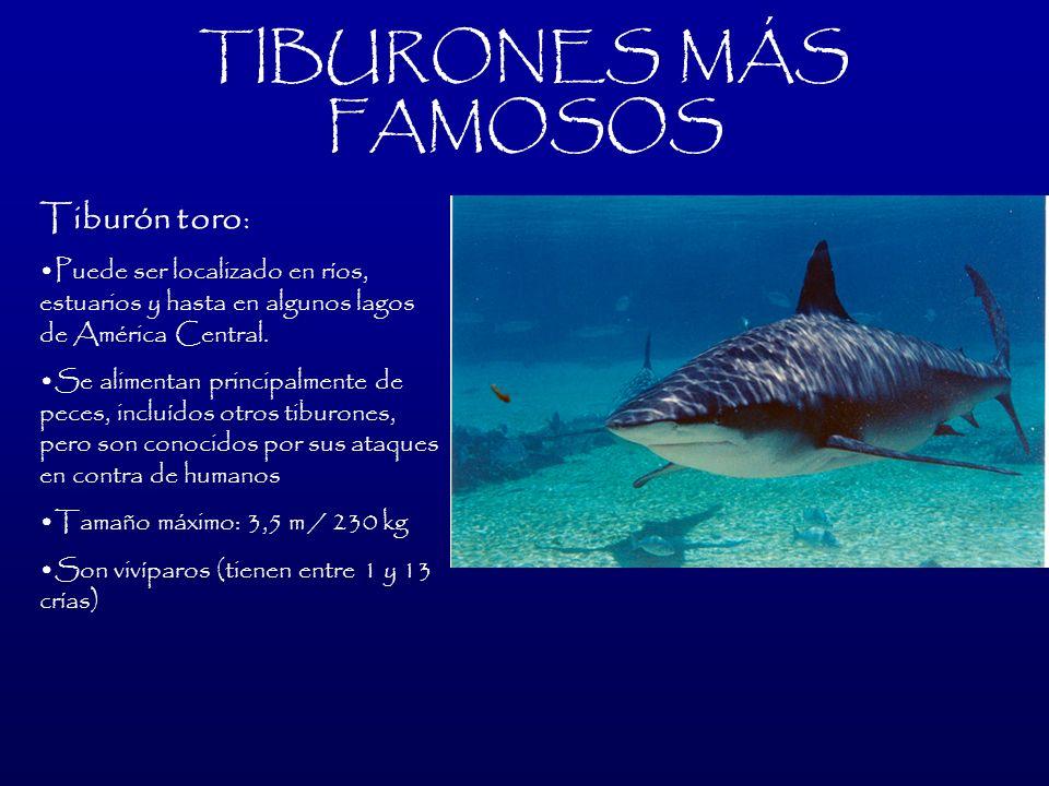 TIBURONES MÁS FAMOSOS Tiburón toro: