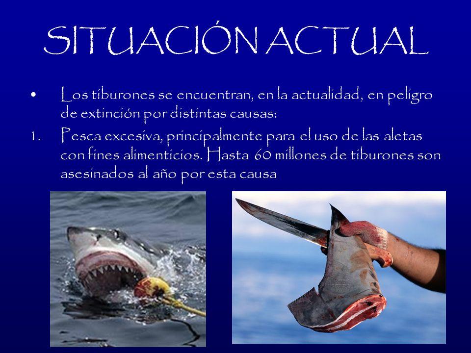 SITUACIÓN ACTUAL Los tiburones se encuentran, en la actualidad, en peligro de extinción por distintas causas: