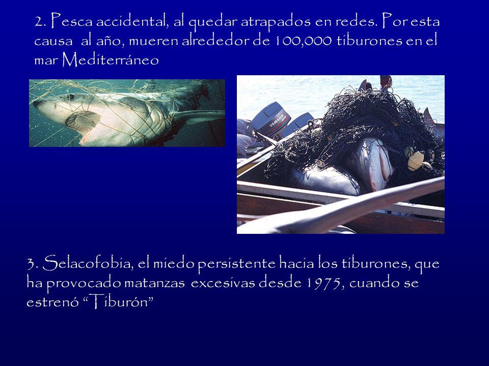 2. Pesca accidental, al quedar atrapados en redes
