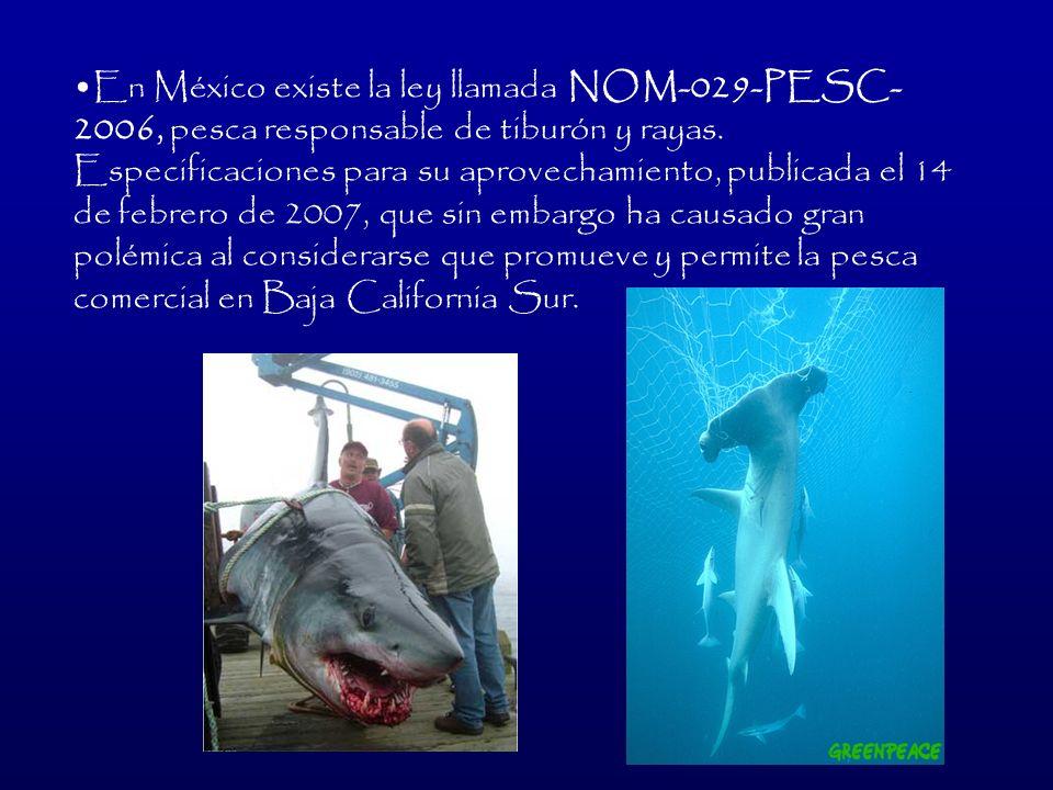 En México existe la ley llamada NOM-029-PESC-2006, pesca responsable de tiburón y rayas.