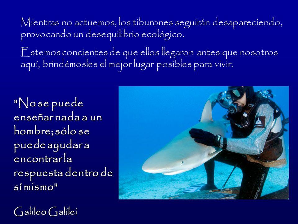 Mientras no actuemos, los tiburones seguirán desapareciendo, provocando un desequilibrio ecológico.