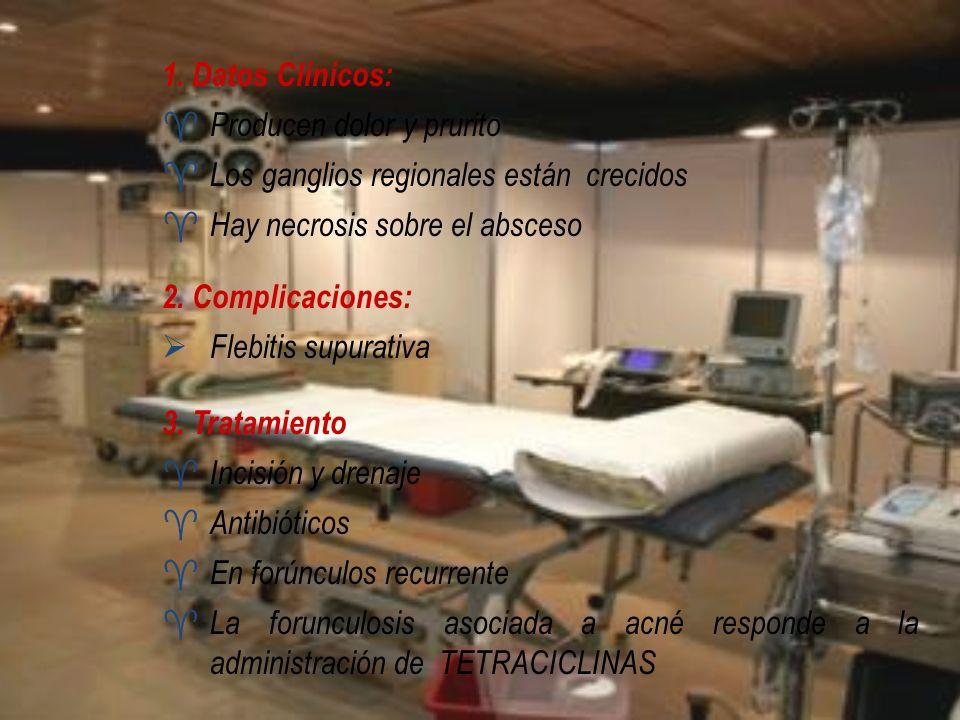 1. Datos Clínicos: Producen dolor y prurito. Los ganglios regionales están crecidos. Hay necrosis sobre el absceso.