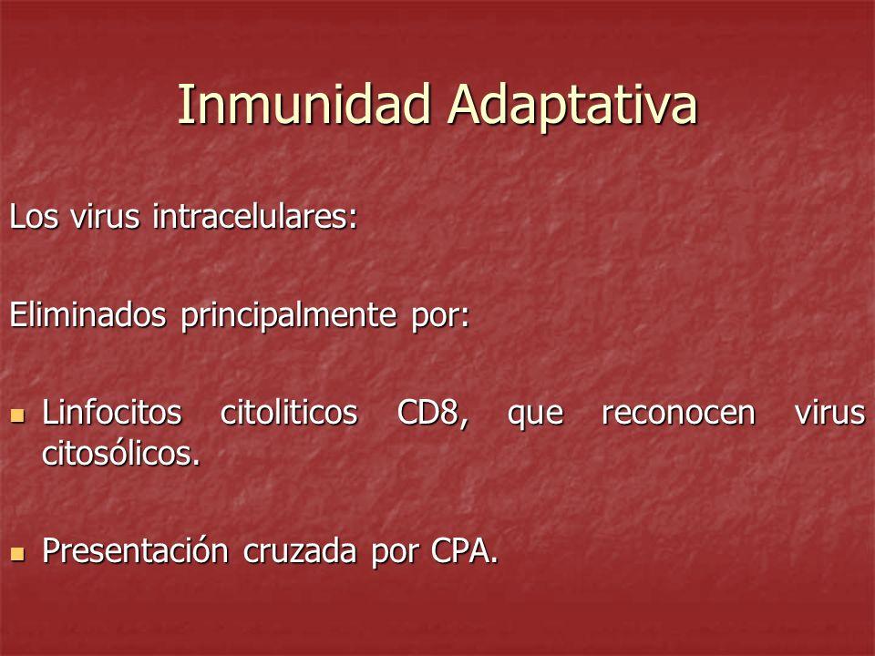 Inmunidad Adaptativa Los virus intracelulares:
