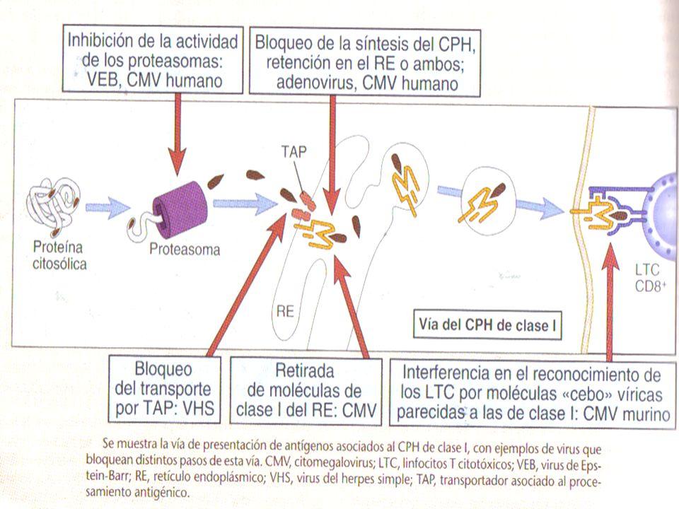Figura 15-6