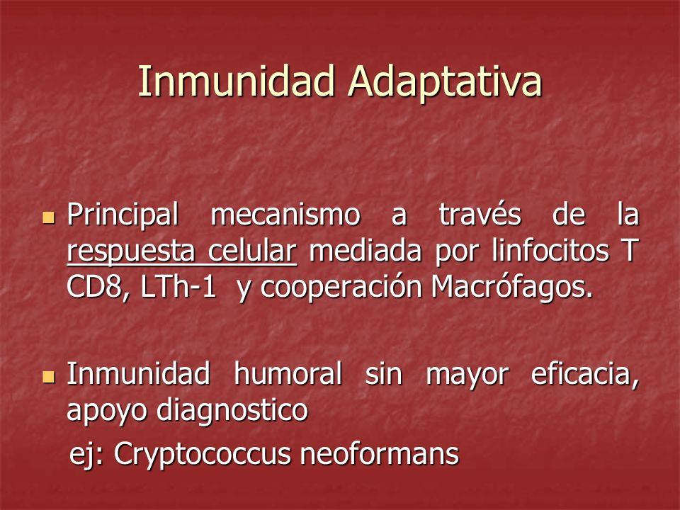 Inmunidad Adaptativa Principal mecanismo a través de la respuesta celular mediada por linfocitos T CD8, LTh-1 y cooperación Macrófagos.