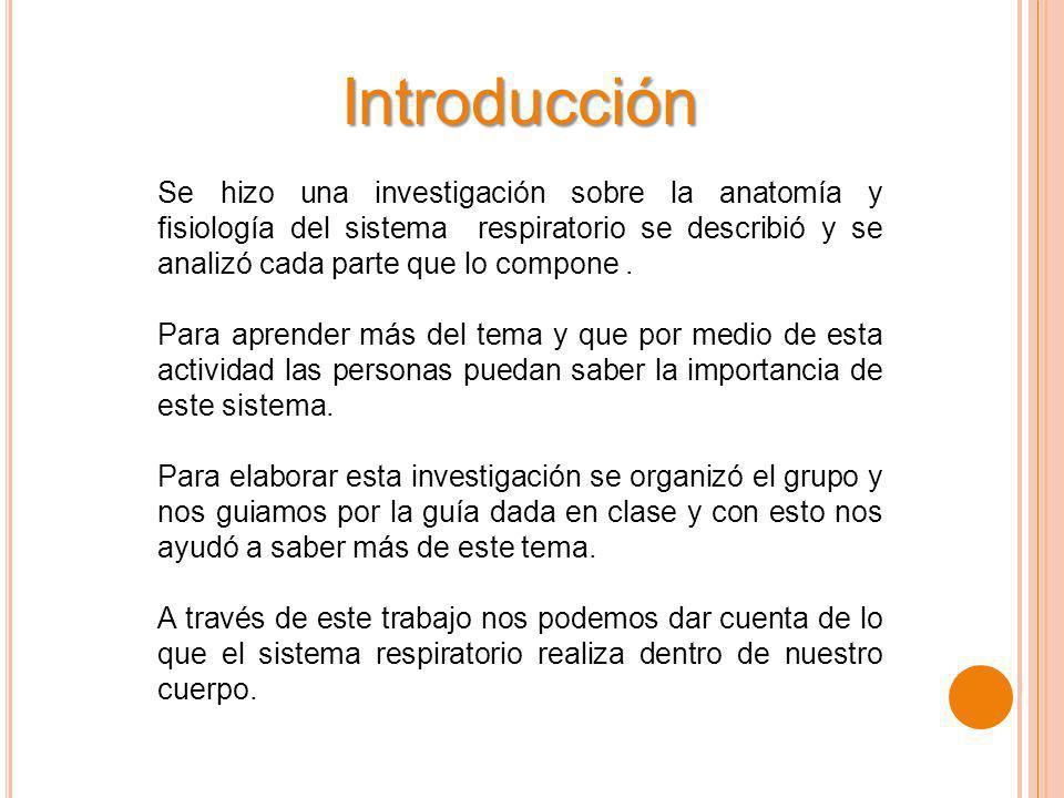 Lujo Temas De Investigación Anatomía Elaboración - Anatomía de Las ...