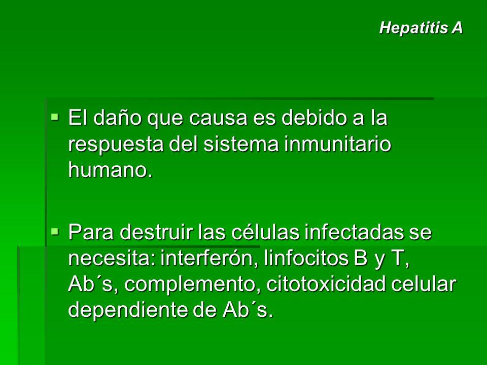 Hepatitis A El daño que causa es debido a la respuesta del sistema inmunitario humano.