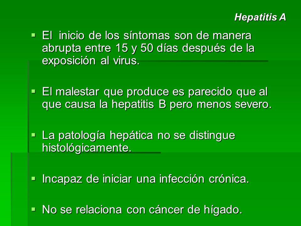 La patología hepática no se distingue histológicamente.
