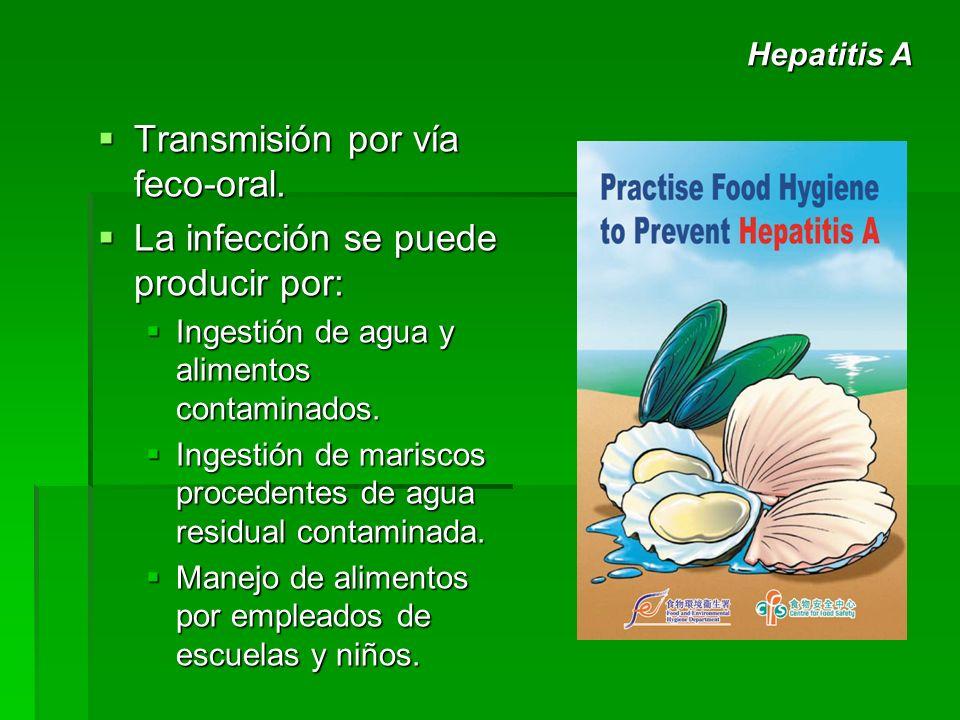 Transmisión por vía feco-oral. La infección se puede producir por: