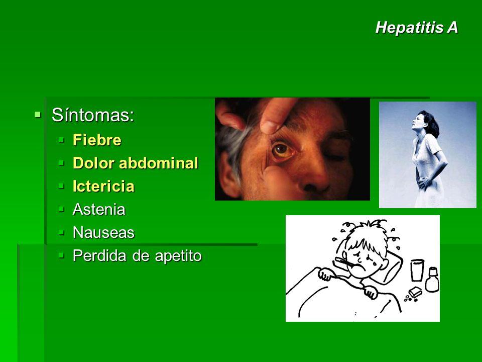 Síntomas: Hepatitis A Fiebre Dolor abdominal Ictericia Astenia Nauseas