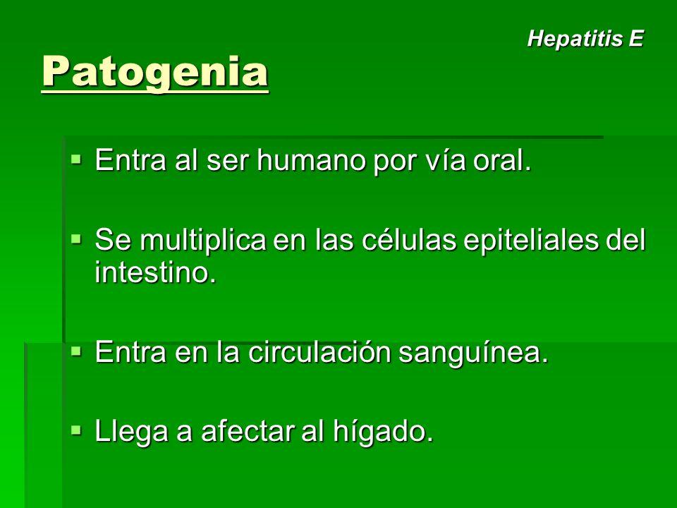 Patogenia Entra al ser humano por vía oral.